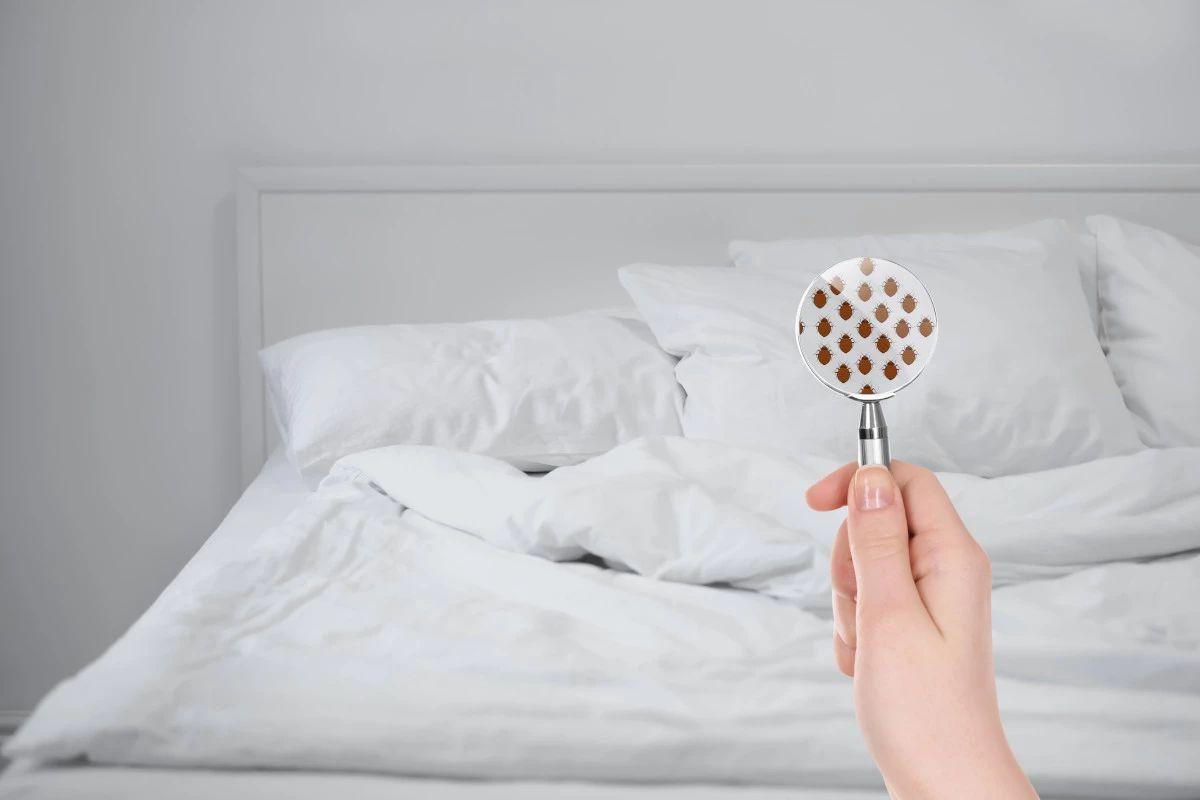 bed bug room check